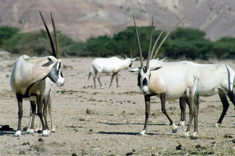 Национальный природный заповедник Хай-Бар