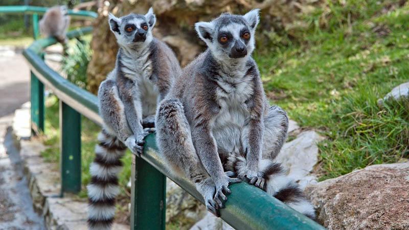 Хайфа Зоопарк